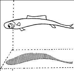 Débuts de la posturologie